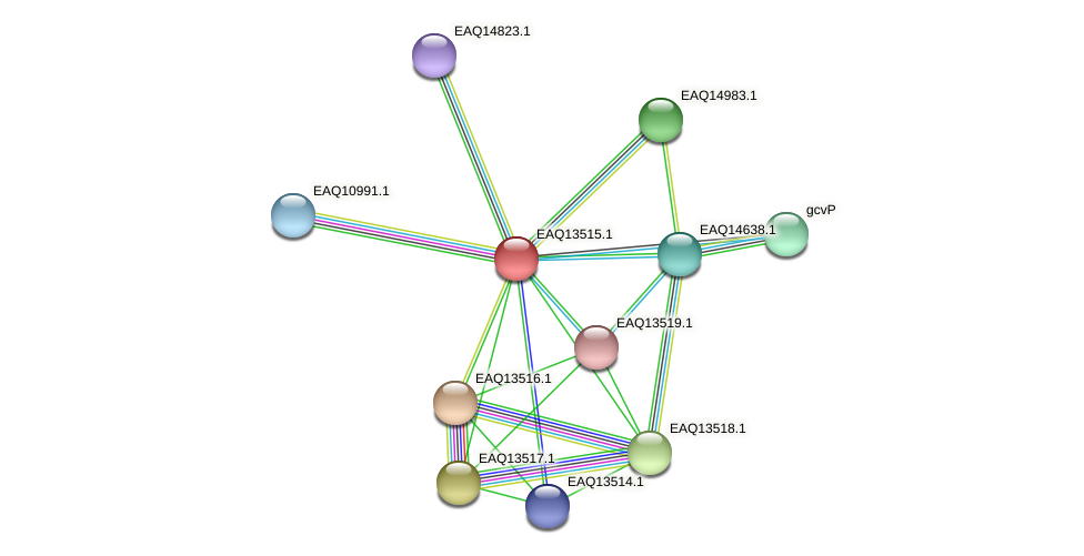RB2654_02339 protein (Maritimibacter alkaliphilus) - STRING interaction network