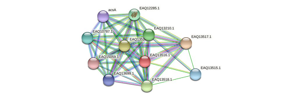 RB2654_02344 protein (Maritimibacter alkaliphilus) - STRING interaction network