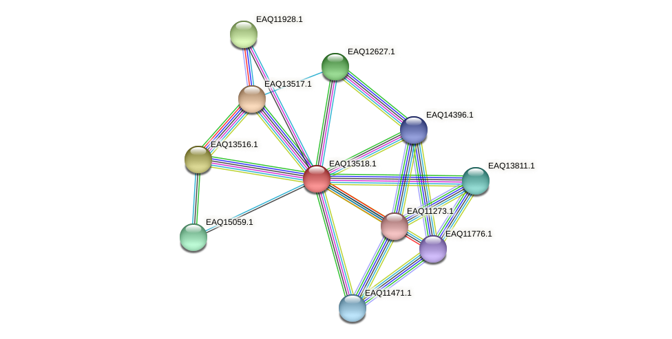 RB2654_02354 protein (Maritimibacter alkaliphilus) - STRING interaction network
