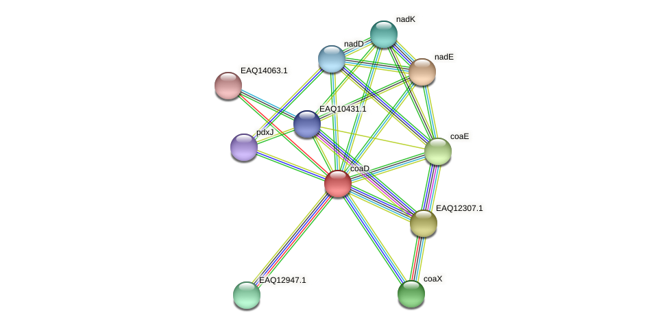 coaD protein (Maritimibacter alkaliphilus) - STRING interaction network