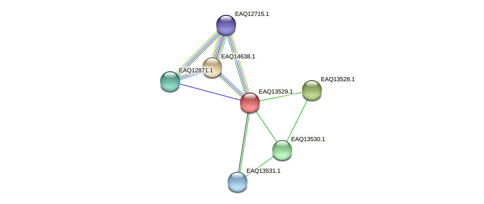 RB2654_02409 protein (Maritimibacter alkaliphilus) - STRING interaction network