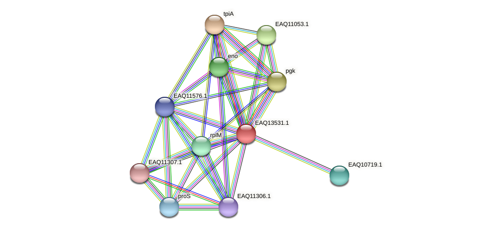 RB2654_02419 protein (Maritimibacter alkaliphilus) - STRING interaction network