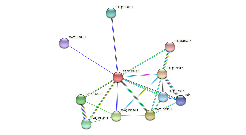 RB2654_02479 protein (Maritimibacter alkaliphilus) - STRING interaction network