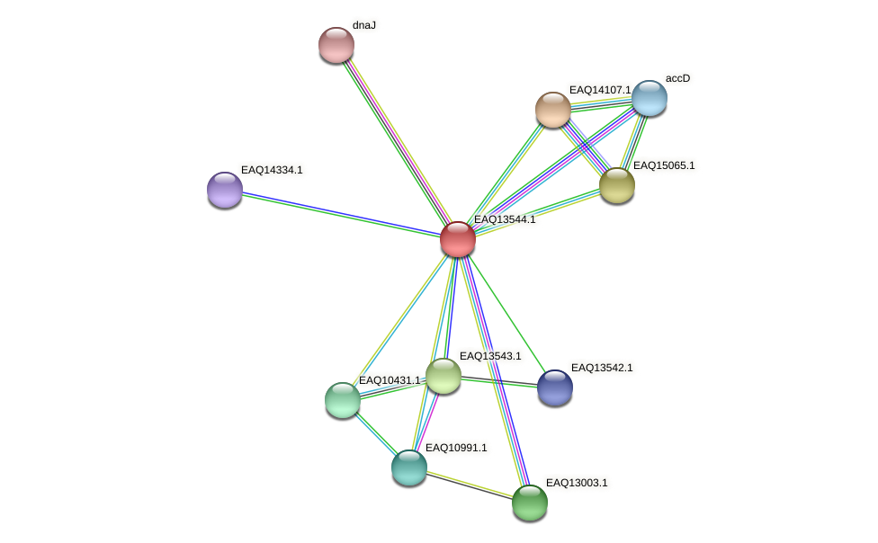 RB2654_02484 protein (Maritimibacter alkaliphilus) - STRING interaction network