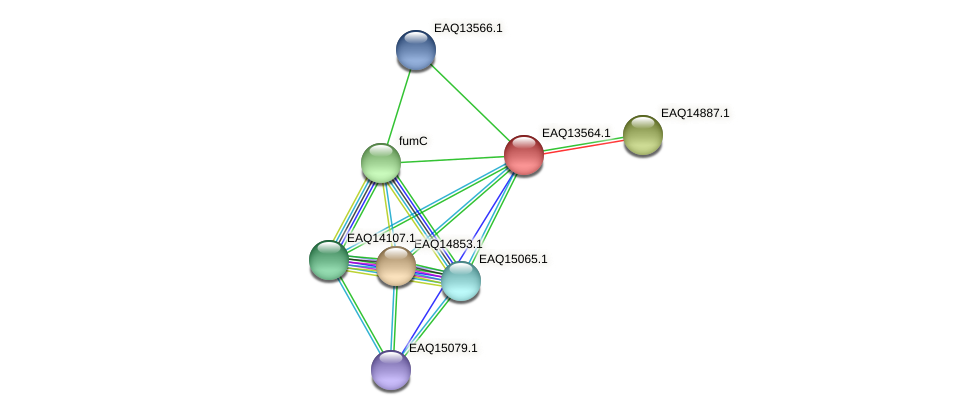 RB2654_02584 protein (Maritimibacter alkaliphilus) - STRING interaction network