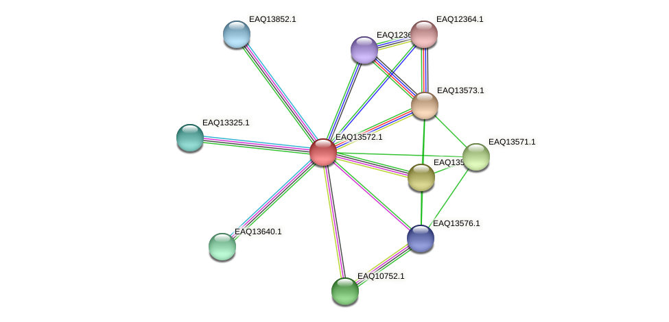 RB2654_02624 protein (Maritimibacter alkaliphilus) - STRING interaction network