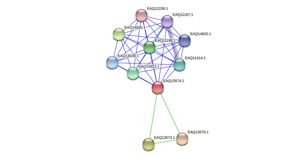 RB2654_02634 protein (Maritimibacter alkaliphilus) - STRING interaction network