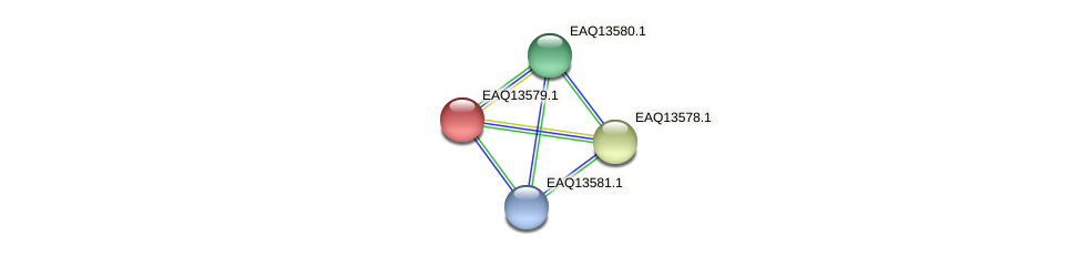 RB2654_02659 protein (Maritimibacter alkaliphilus) - STRING interaction network