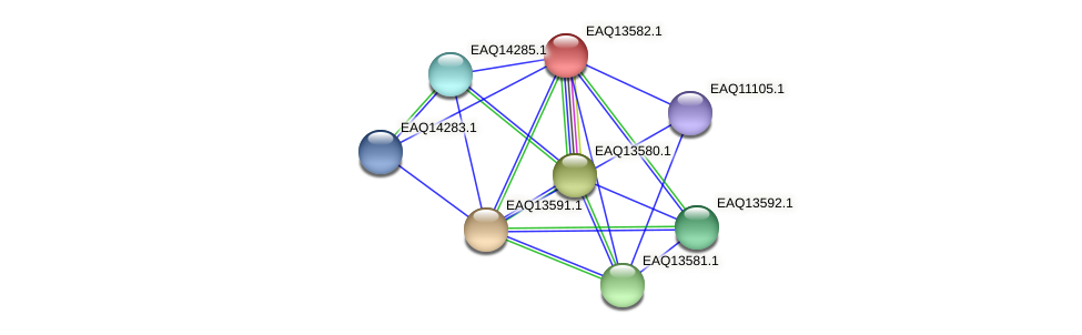 RB2654_02674 protein (Maritimibacter alkaliphilus) - STRING interaction network