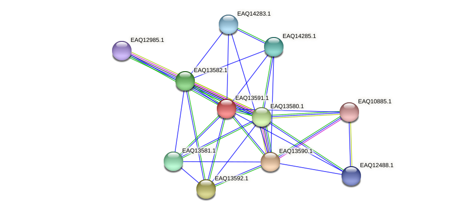 RB2654_02719 protein (Maritimibacter alkaliphilus) - STRING interaction network