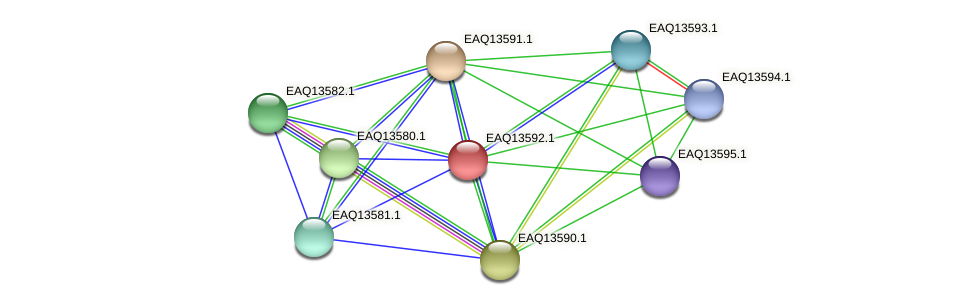 RB2654_02724 protein (Maritimibacter alkaliphilus) - STRING interaction network