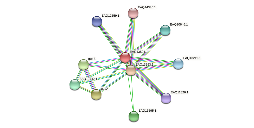 RB2654_02734 protein (Maritimibacter alkaliphilus) - STRING interaction network