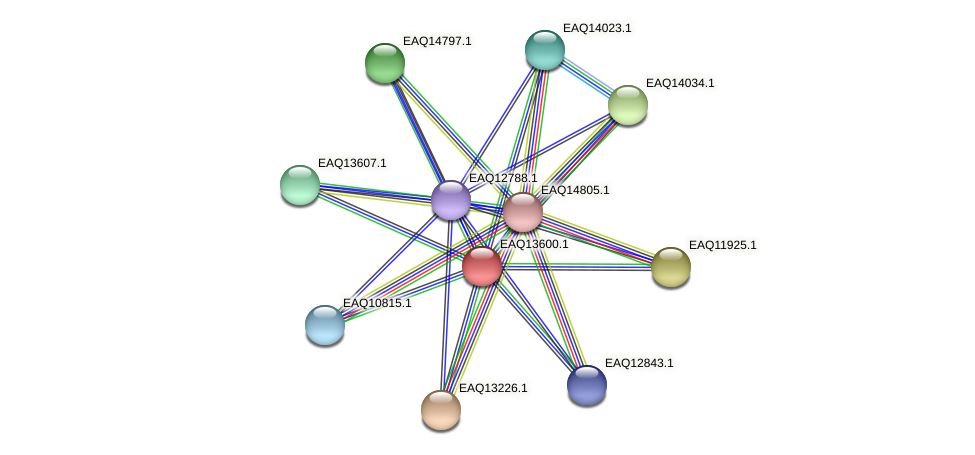 RB2654_02764 protein (Maritimibacter alkaliphilus) - STRING interaction network