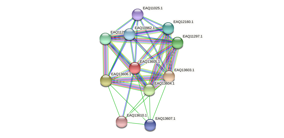 RB2654_02789 protein (Maritimibacter alkaliphilus) - STRING interaction network