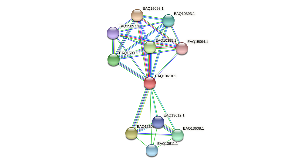 RB2654_02814 protein (Maritimibacter alkaliphilus) - STRING interaction network