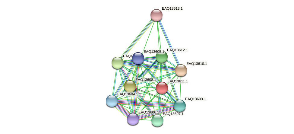 RB2654_02819 protein (Maritimibacter alkaliphilus) - STRING interaction network