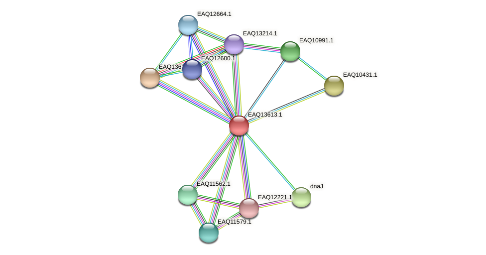 RB2654_02829 protein (Maritimibacter alkaliphilus) - STRING interaction network