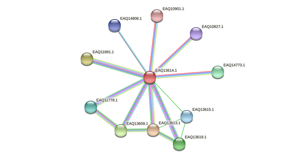 RB2654_02834 protein (Maritimibacter alkaliphilus) - STRING interaction network