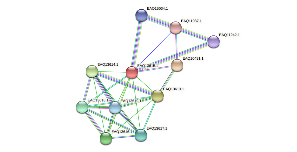 RB2654_02839 protein (Maritimibacter alkaliphilus) - STRING interaction network