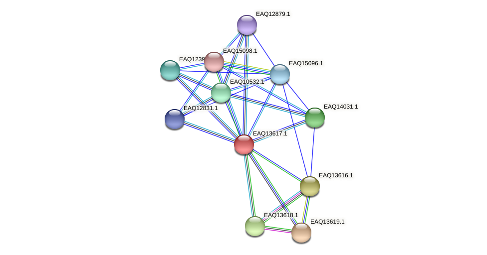 RB2654_02849 protein (Maritimibacter alkaliphilus) - STRING interaction network
