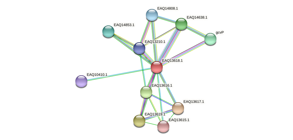 RB2654_02854 protein (Maritimibacter alkaliphilus) - STRING interaction network
