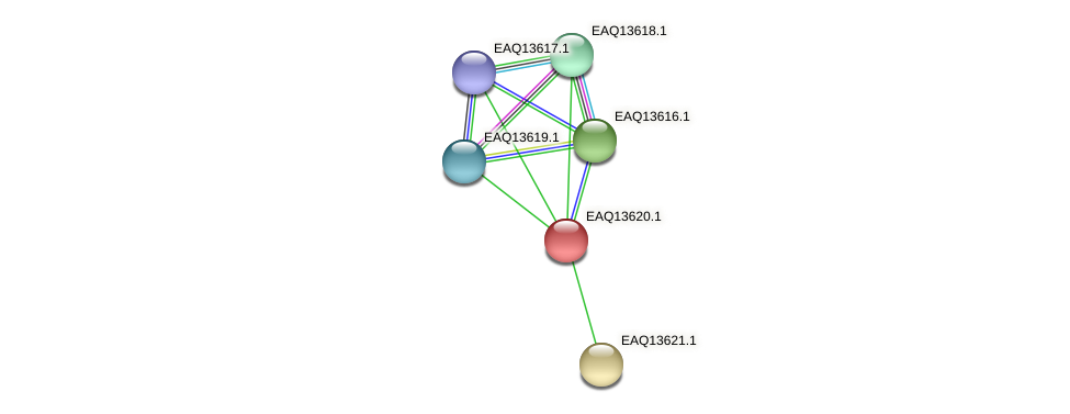 RB2654_02864 protein (Maritimibacter alkaliphilus) - STRING interaction network