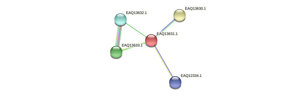 RB2654_02919 protein (Maritimibacter alkaliphilus) - STRING interaction network