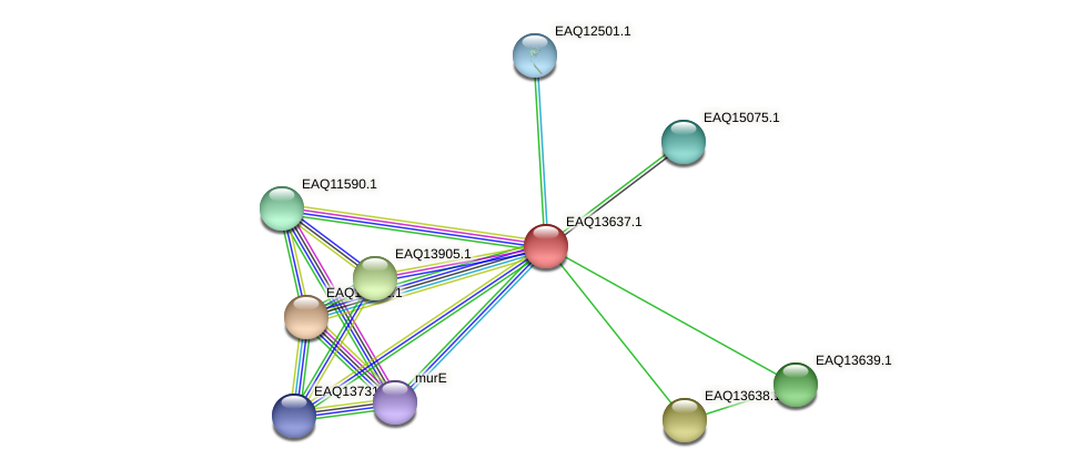 RB2654_02949 protein (Maritimibacter alkaliphilus) - STRING interaction network