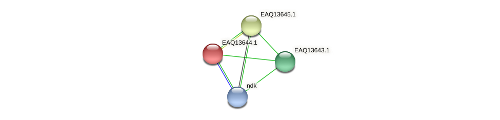 RB2654_02984 protein (Maritimibacter alkaliphilus) - STRING interaction network