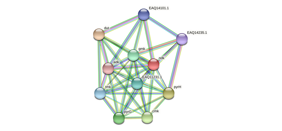 ndk protein (Maritimibacter alkaliphilus) - STRING interaction network