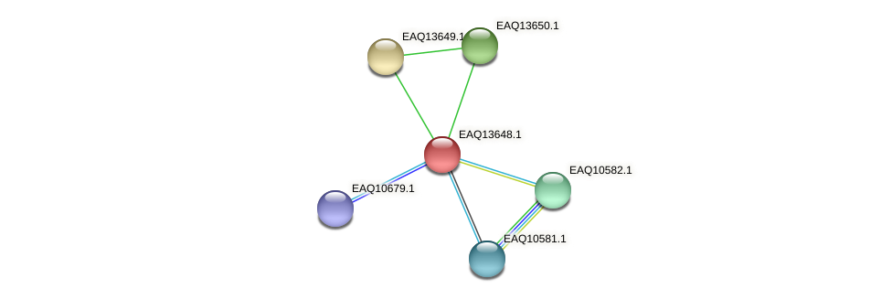 RB2654_03004 protein (Maritimibacter alkaliphilus) - STRING interaction network