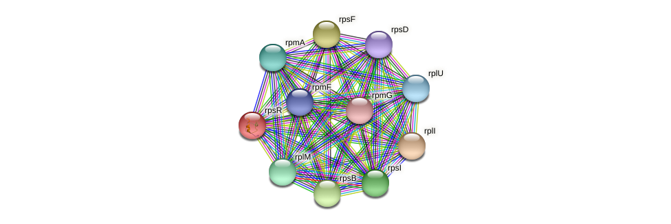 rpsR protein (Maritimibacter alkaliphilus) - STRING interaction network