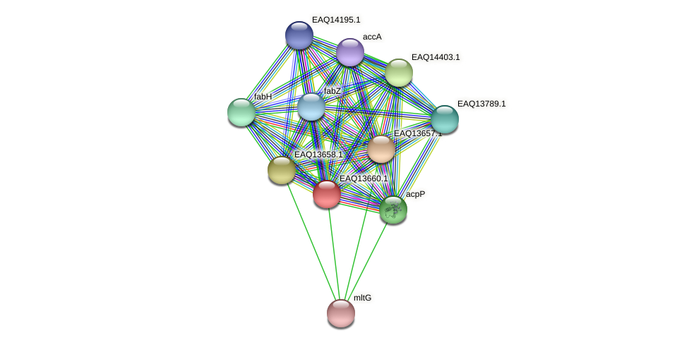 RB2654_03064 protein (Maritimibacter alkaliphilus) - STRING interaction network