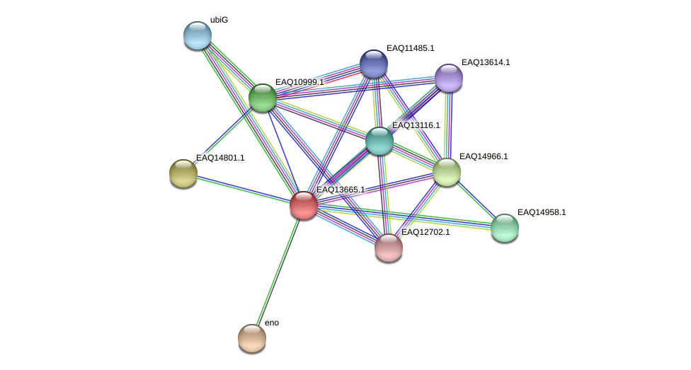 RB2654_03089 protein (Maritimibacter alkaliphilus) - STRING interaction network