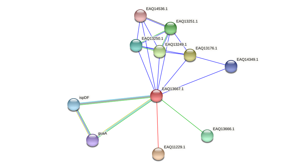 RB2654_03099 protein (Maritimibacter alkaliphilus) - STRING interaction network