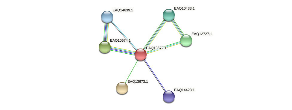 RB2654_03124 protein (Maritimibacter alkaliphilus) - STRING interaction network