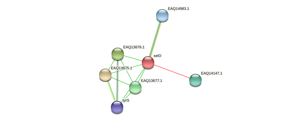 RB2654_03134 protein (Maritimibacter alkaliphilus) - STRING interaction network