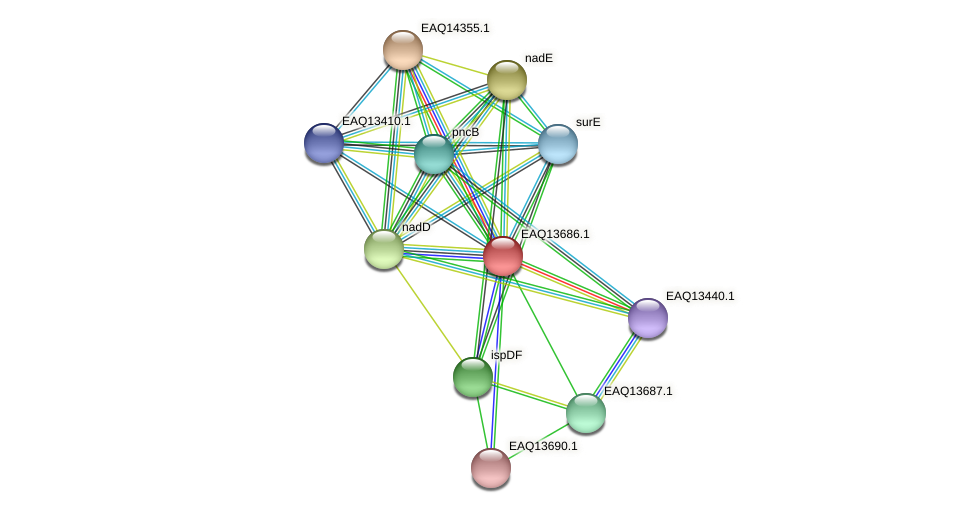 RB2654_03194 protein (Maritimibacter alkaliphilus) - STRING interaction network