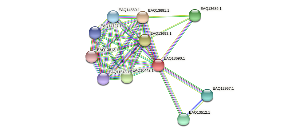 RB2654_03214 protein (Maritimibacter alkaliphilus) - STRING interaction network