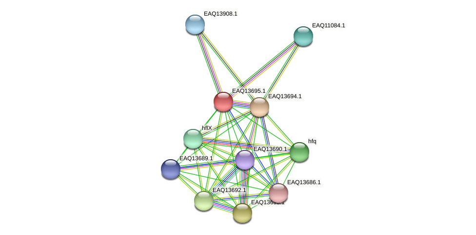 RB2654_03239 protein (Maritimibacter alkaliphilus) - STRING interaction network