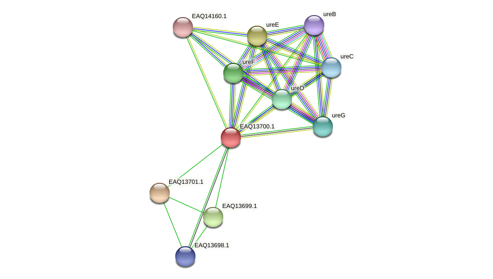 RB2654_03264 protein (Maritimibacter alkaliphilus) - STRING interaction network