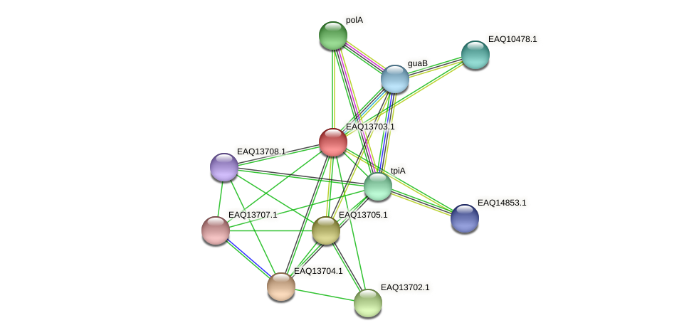 RB2654_03279 protein (Maritimibacter alkaliphilus) - STRING interaction network