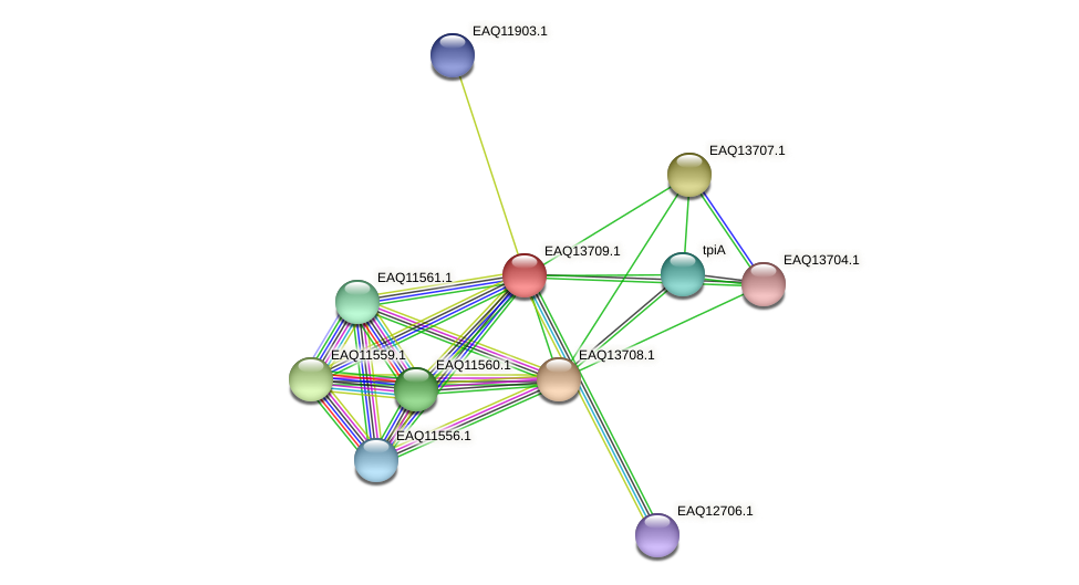 RB2654_03309 protein (Maritimibacter alkaliphilus) - STRING interaction network