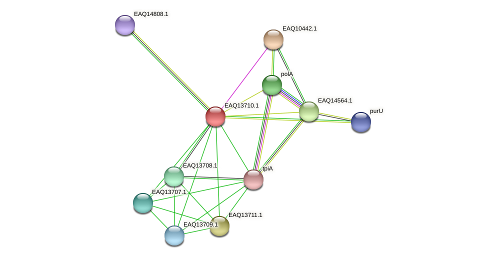 RB2654_03314 protein (Maritimibacter alkaliphilus) - STRING interaction network