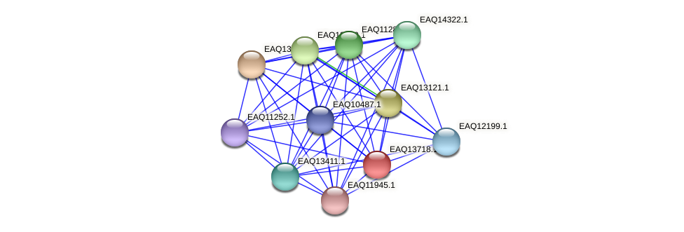 RB2654_03354 protein (Maritimibacter alkaliphilus) - STRING interaction network