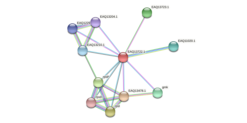 RB2654_03374 protein (Maritimibacter alkaliphilus) - STRING interaction network