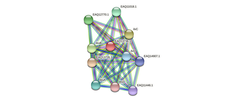 RB2654_03444 protein (Maritimibacter alkaliphilus) - STRING interaction network