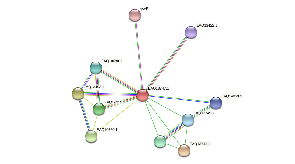 RB2654_03499 protein (Maritimibacter alkaliphilus) - STRING interaction network