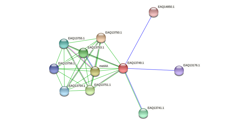 RB2654_03509 protein (Maritimibacter alkaliphilus) - STRING interaction network