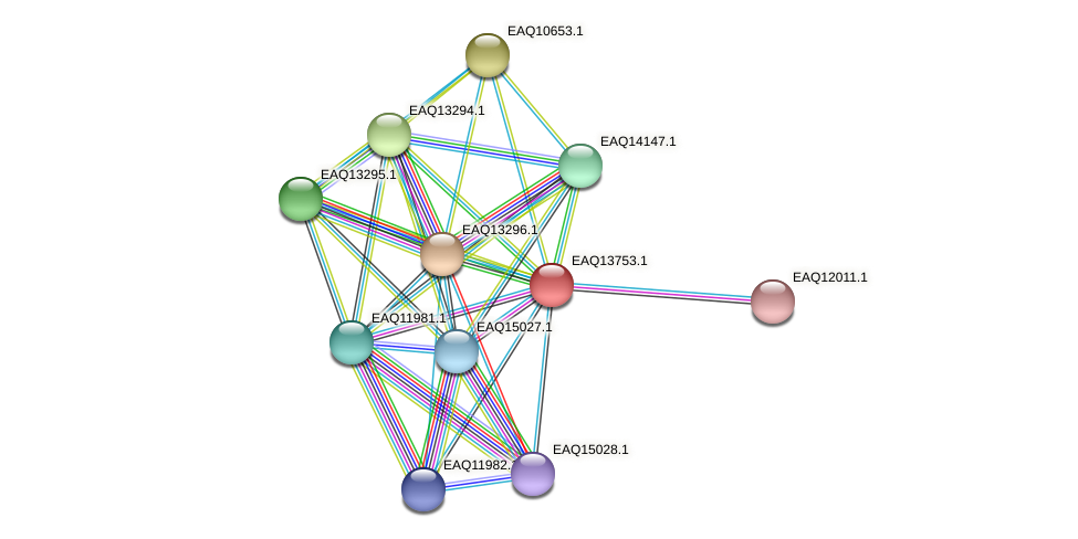 RB2654_03529 protein (Maritimibacter alkaliphilus) - STRING interaction network